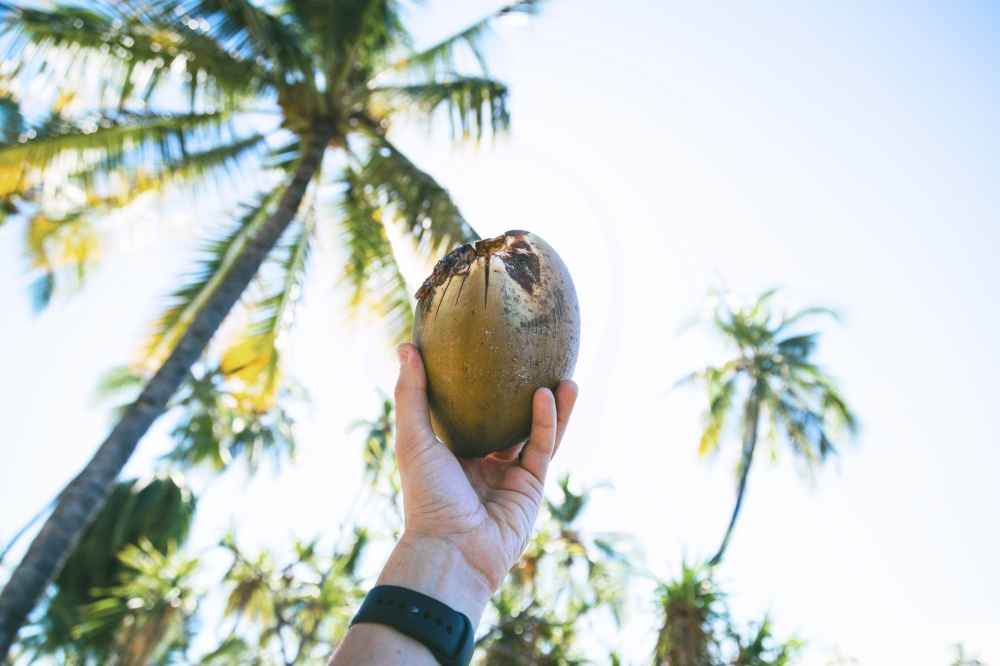 We find out what it means to dream about coconuts