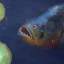 Piranhas were found in a Yorkshire lake.